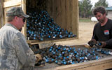 sorting grenades as part of military range clearance